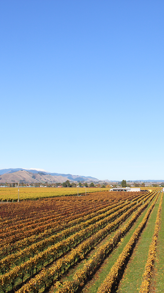 Picture of Waimea Estate Pinot Gris 2020, Nelson