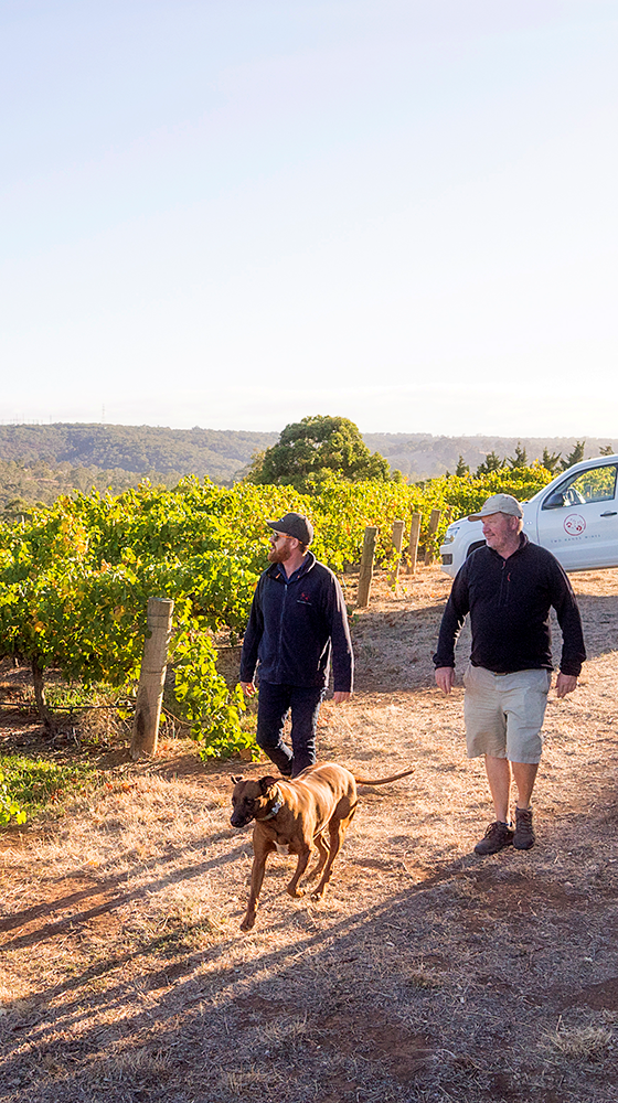 Picture of Two Hands 'Angels' Share' Shiraz 2019, McLaren Vale