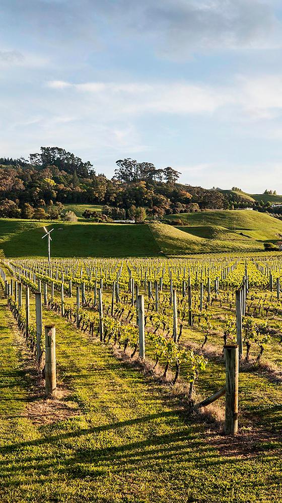 Picture of Te Mata Estate 'Cape Crest' Sauvignon Blanc 2018, Hawke's Bay