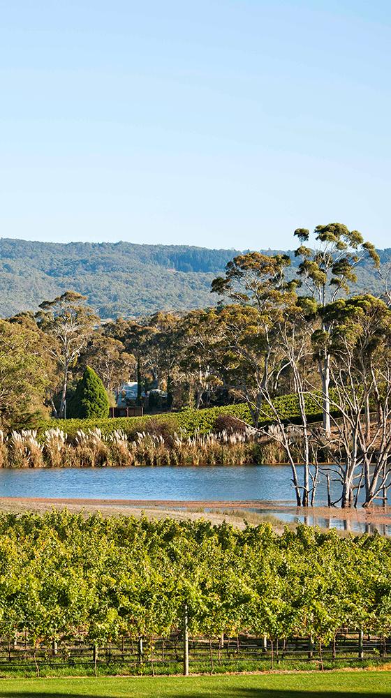 Picture of Shaw + Smith Sauvignon Blanc 2020, Adelaide Hills