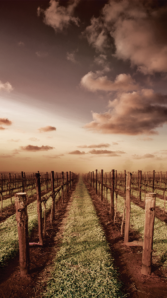Picture of Yalumba 'The Menzies' Cabernet Sauvignon 2015, Coonawarra