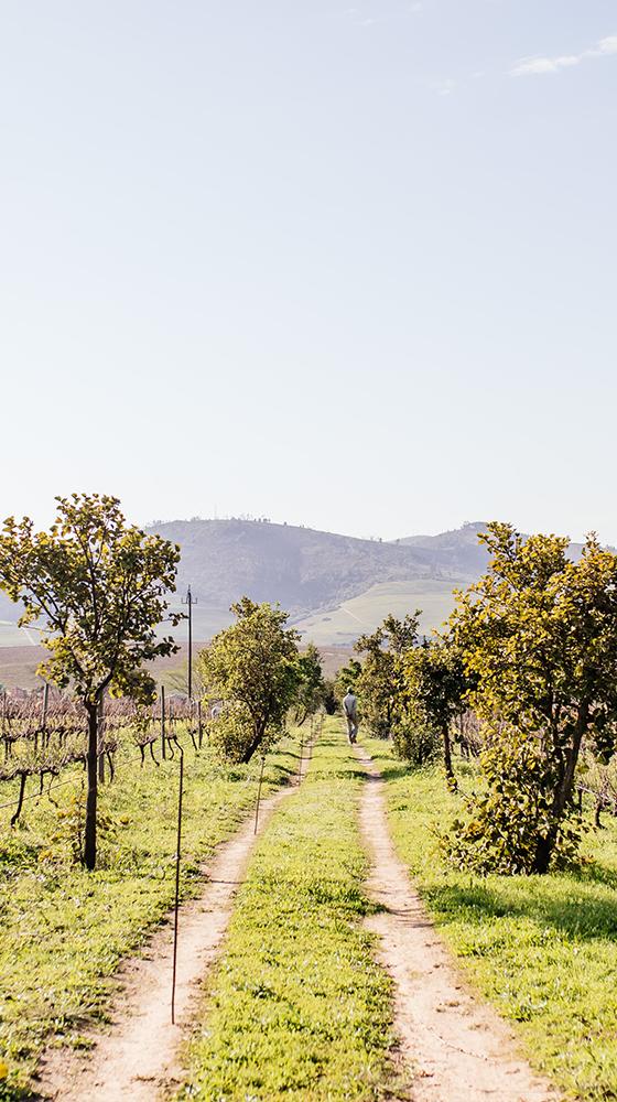 Picture of Reyneke 'Vinehugger' Organic Chenin Blanc 2020/21, South Africa